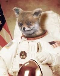 Stoned Fox Meme - stoned fox meme rules russian internet readwrite