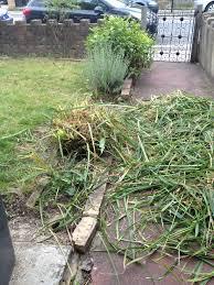 removing stubborn ornamental grass gardening forum