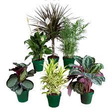 decoration house plants rona
