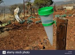 scene of country vegetable garden with rain gauge kwazulu natal