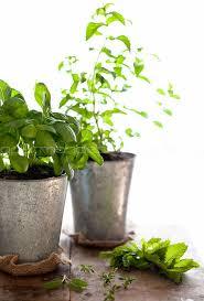 Herb Window Box Indoor How To Grow Your Own Indoor Culinary Herb Garden Simple Bites
