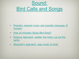 becoming a bird sight sound and words perspective and
