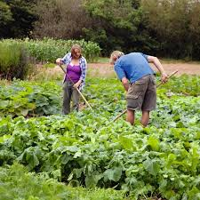 crop rotation get the most from your vegetable plot suttons