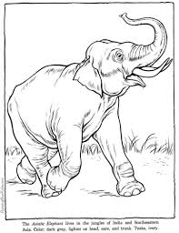 printable zoo animal coloring pages zoo animals coloring page elephant
