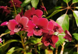 pictures of orchids 5 things you didn t about orchids smithsonian insider