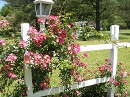 perennial garden design ideas diy garden trends