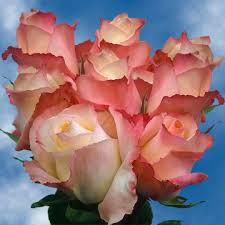 multicolored roses cheap pink roses 50 multicolored roses bicolor roses