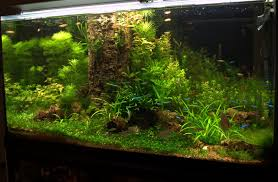 Aquascape Tree Aquascaping World Competition Gallery Gathering By The Old