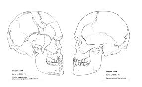 skull coloring pages anatomy funycoloring