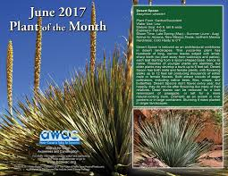 native plants of arizona helendale community services district a california csd