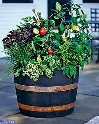 half oak barrel planters for sale in celbridge kildare from finten74