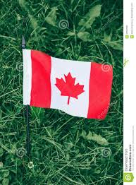 Green Day Flag Canadian Flag With Red Maple Leaf Lying In Green Grass Stock Image