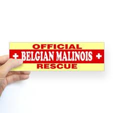 belgian shepherd standard buy cafepress belgian shepherd tervuren bumper sticker sticker