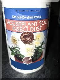 heidi horticulture common houseplant pests part 2 fungus gnats