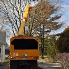 billy s best deal tree service tree services 522 weeks ave