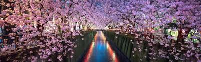 cherry blossom pics cherry blossom tours japan wendy wu tours