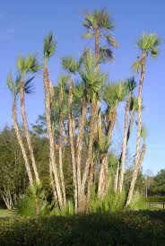 era nurseries buy trees online wholesale australian native 29 best plants in my garden images on pinterest tropical gardens