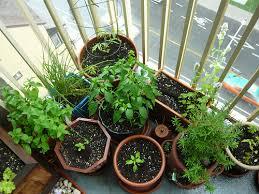 Container Gardening Peas - container vegetable gardening and how to do it your garden and