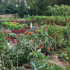 Veg Garden Ideas Veg Garden Home Design Ideas And Pictures