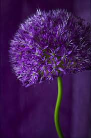 purple 1927 best la la lavender and purple images on pinterest pretty