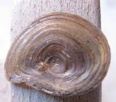 snails backyard and beyond page 3