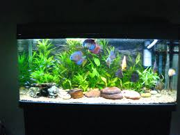home aquarium decorations finest furniture acrylic aquarium with