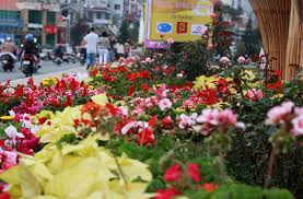 Flower Companies Pictures Flowers Bloom At Da Lat Flower Festival 2013 News