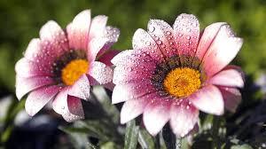 spring flower magnusson group u2013 spring estate sale preview 7 sales coming up