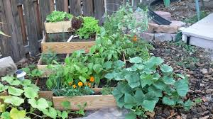 square foot vegetable garden layout intro to urban gardening a rooftop and container gardening