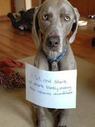 Dog Shaming Meme - check out this funny meme hilarious meme from the house of funny