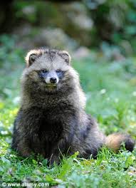 ugg boots australia made in china raccoon dogs skinned alive to cheap copies of ugg boots