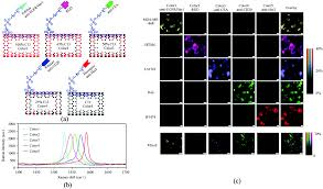 nanoscale optical probes for cellular imaging chemical society