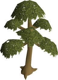 yew tree school runescape wiki fandom powered by wikia