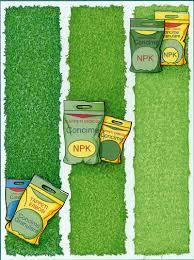 concimazione tappeto erboso giardini