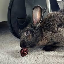 smallpetselect timothy hay rabbits guinea pigs chinchillas