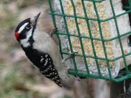 feathered feature making suet for your feeders the infinite spider