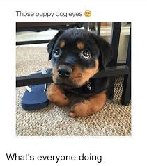 Puppy Eyes Meme - those puppy dog eyes what s everyone doing dogs meme on me me