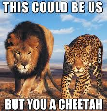 This Could Be Us Meme - this could be us but you a cheetah humoar com