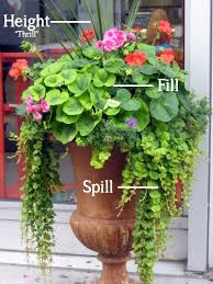 Potted Plant Ideas For Patio by 246 Best Florida Container Gardening And Other Interesting Garden