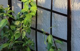 Plant Trellis Garden Wall Climbing Plant Trellisiron Rooster Garden Shop