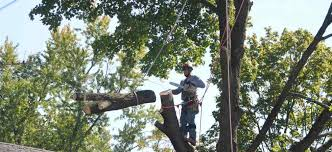 commercial tree services wilton ct