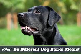 What Do Different Dog Barks Mean What is Your Lab Saying