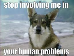 Hobo Memes - littlest hobo dog quickmeme