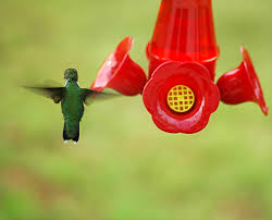 hummingbird at feeder free stock photo public domain pictures