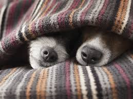 Small House Dogs Cold Weather Tips For Dogs