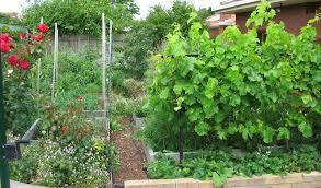 my garden deep green permaculture