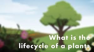 bbc bitesize ks2 science the lifecycle of a plant