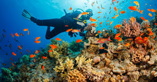 Coral Reefs Of The World Map by How We U0027re Teaching Endangered Coral Reefs To Help Themselves