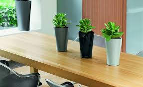 plant for office best plant for office home design ideas and pictures