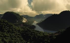 forest landscape jungle forest mountains river calming calm